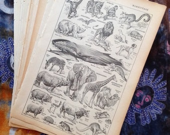 10 French dictionary pages old book pages paper ephemera Animals Christmas gift