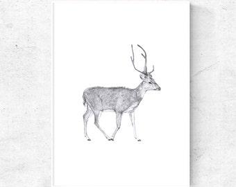 Deer Illustration print, pencil print, printable pencil sketch, Instant Download digital print, 4x6, 5x7 print, 12x16 print, animal wall art