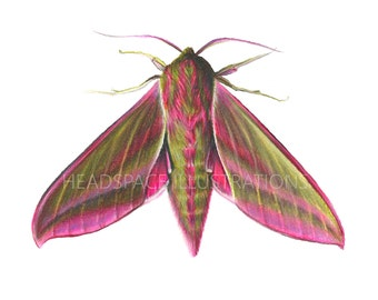 Pink and Green Moth Colored Pencil Art Print by Headspace Illustrations