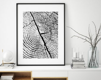 Tree Ring, Tree Ring Prints, Black and White Prints, Nature Prints, Best Selling, Forest Photo, Photos of Forest, Trees Print, Print, 165
