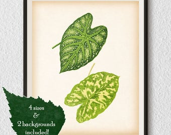 Leaf art, Green plant leaves, Botanical decor, Leaf wall art, Leaf poster, Instant download leaf print, Minimalist art, 8x10, 11x14, JPG #94
