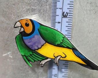 gouldian finch Magnet Gift for Bird lover for Locker Car or Fridge