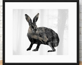 Dreams of a hare