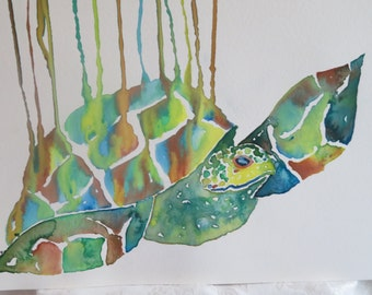 Dripping Turtle