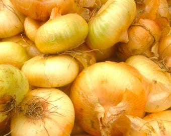 Borettana Cipollini Italian Heirloom Button Onion Organic Sweet 100+ Seeds #1148