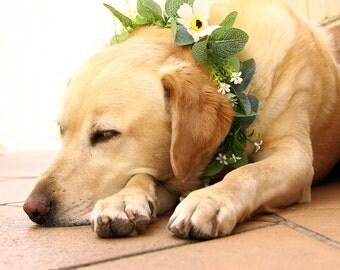 Hera Dog Flower Crown | Eucalyptus Leaves | Australian Natives | Dog Flower Crown | Forest and Rustic Wedding | Green Leaves Flower Crown