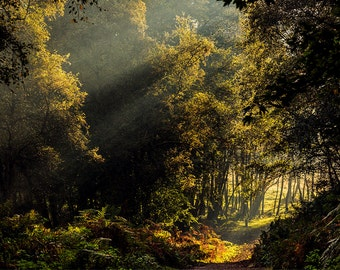 Landscape Photography Print- Morning Sunbeams- Cannock Chase, Staffordshire