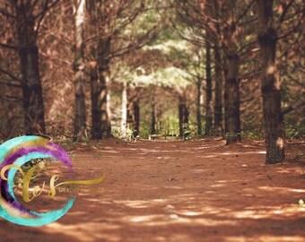 Woods forest digital background