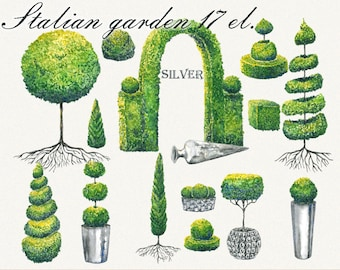 Tree clipart, italian clipart, garden clipart, Topiary clipart, Hand Painted, clip art, digital watercolor