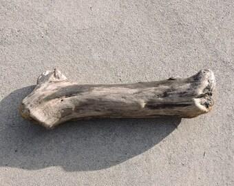Driftwood log Piece ~ Pacific Northwest