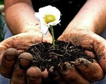 Gardeners Hand Cream (Lavender)