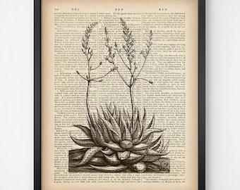 Dictionary page, Succulent print, Succulent wall art, Dictionary artwork, Botanical printable art, Haworthia, Antique print, Instant print