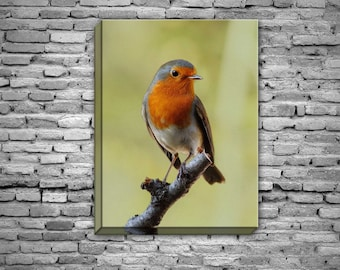 robin picture canvas print bird choice of sizes