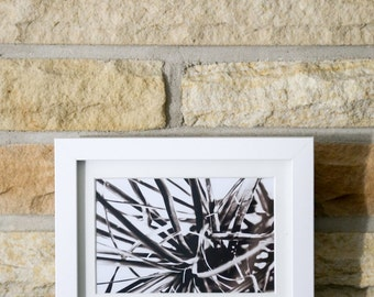 Black and White Plant Leaf Spring Home Decor Abstract Minimalist Photograph Print