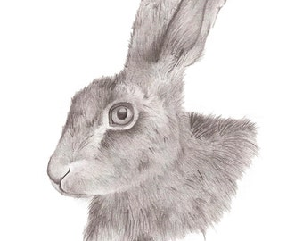 Hare Pencil Drawing Art Print