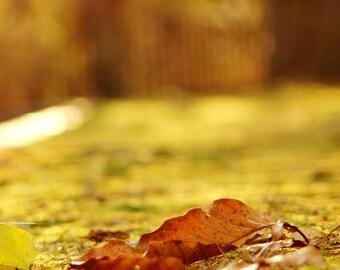 Autumn leaves rrr