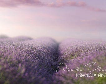 Lavender Field with pink Clouds, Backdrop, Digital, Download, Art, Flower, Photography, Manipulation, Photoshop, Composing