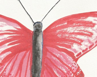 Sanguine watercolor butterfly print