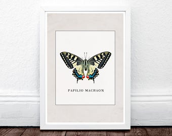 Butterfly Wall Art Print, Butterfly Art, Insect Art, Nature Photography, Butterfly Photo, Large Wall Art, Vintage Wall Art, Butterfly Decor