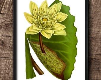 Water Lily · Instant Download · Flower · Vintage · Printable · Digital File #94