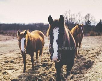 Horse Photography, Farm Animal Photo, Rustic Home Decor