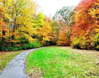 "8"" x 10"" Walk into Fall Photograph"