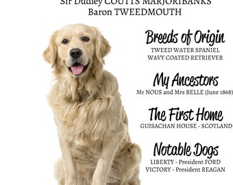 GOLDEN RETRIEVER HISTORY - breed - poster - decoration - gift - dog - customisable