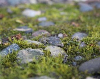 Moss and Stone - Digital Download