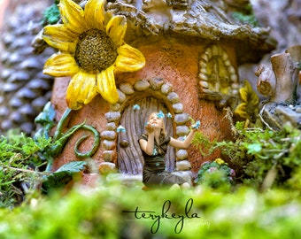 Fairy sunflower home