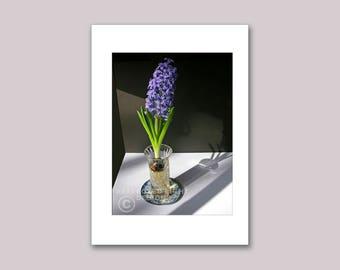 Photo Note Card, Purple Hyacinth &  Shadow