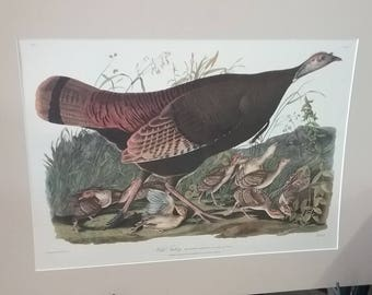 Wild Turkey Female and Young Matted Print