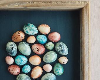Speckled plaster egg framed wall art: handmade in Australia by Kuberstore