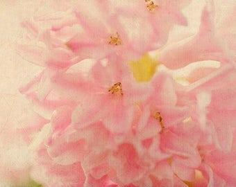 Hyacinth Flower Print, Flower Photography,  Floral Art Print, Pink Bedroom Decor, Pastel Wall Art