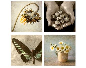Four Rustic Prints Set, Still Life Photography, Farmhouse Decor, Flower Print, Butterfly Art, Sunflower Photo, Quail Eggs Sepia Print