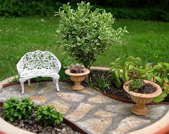 Miniature Garden Tree or Fairy Garden Tree, Indoor or Outdoor, Baby Boxwood, Easy Maintenance, Bonsai Start, Pre-Bonsai, Drought Tolerant