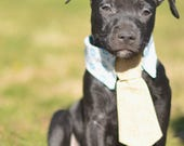 Dapper Dog Collars