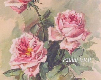Pink Roses, Art Print, Half Yard Long, Shabby Chic Decor, CP340