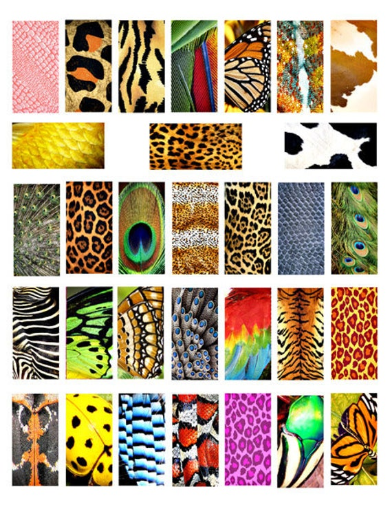 Animal Insect skin textures patterns clip art domino collage sheet 1x2 inch tiger leopard fish digital download graphics images printables