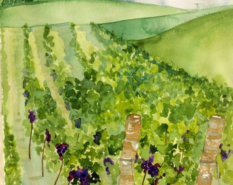 Original Watercolour Painting Italian Vineyard