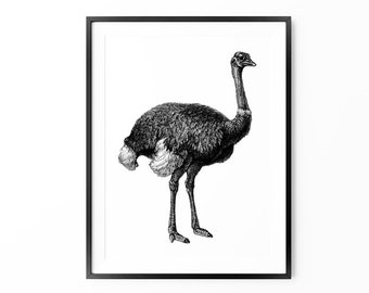 Vintage Art, Ostrich Print, Large Wall Art, Oversized Art, Home Decor, Trending Items, Trending Now