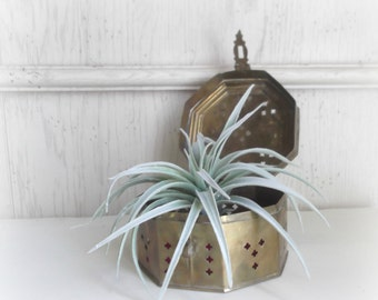 brass cricket box boho succulent planter pierced brass box jewelry organizer trinket holder