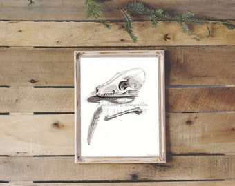 Bone Collection Drawing- Giclee Fine Art Print - Pen and Ink Illustration - Skull Painting Illustration