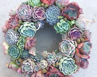 "14"" Colorful Succulent Wreath-Succulent Decor-Succulent Door Wreath-Live Succulent Wreath-Succulents-Succulent Decoration-Everyday Wreath"