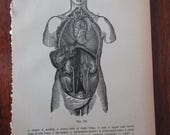 1800s original page from antique medical book - abdominal cavity