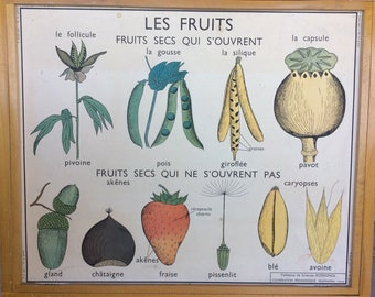 Stunning Original Vintage French School double-sided poster of fruits and seeds