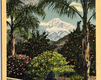 California, Palm Trees, Sunshine, Oranges - Linen Postcard - Postcard - Unused (LL)