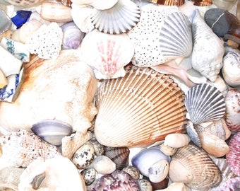 MASSIVE Beach Treasures Instant Collection - Sea shells, Seashell, Sea Glass, Pottery - Ocean Curiosities Supply  -  Nautical Coastal Decor