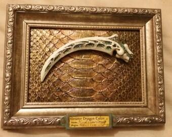 Dragon Claw Artifact on Dragon Hide: Discarded item # 796-Q