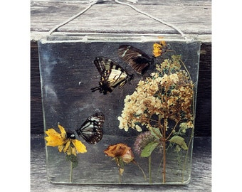 Preserved Nature Window Hanging