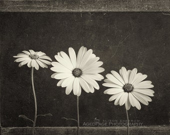 Sepia Print, Flower Photography, Farmhouse Style Decor, Neutral Wall Art, Still Life, Rustic Art | 'Three Flowers'